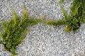jadar-kamien-ogrodowy.13